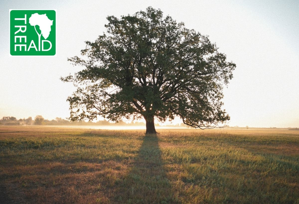 We've donated £250 to Tree Aid – but that's just the beginning!